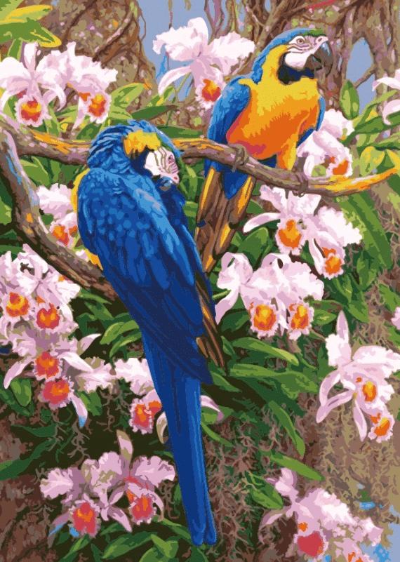 Malowanie po numerach – Papugi na drzewie